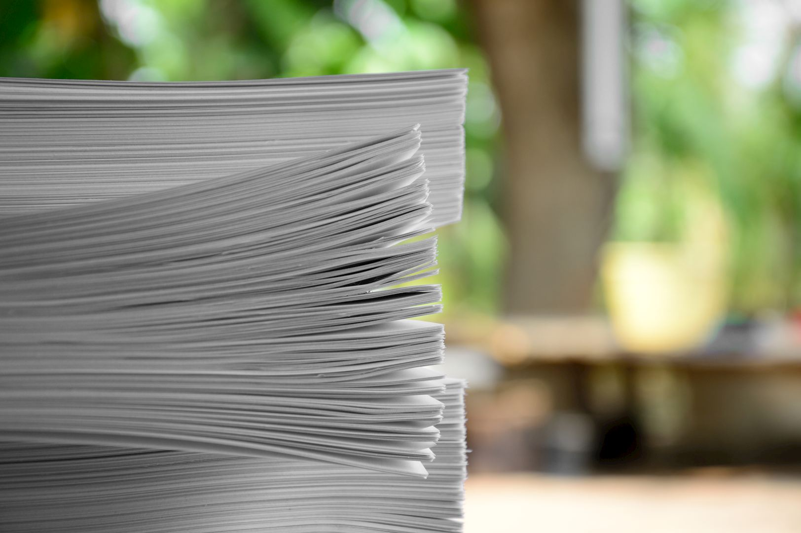 News | How many trees perish to make a book? | die Keure